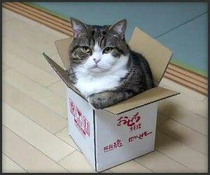 고양이가 작은 박스 안에 있음
